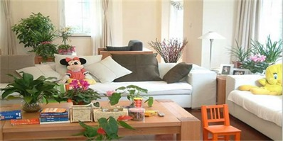 家里客厅植物摆放风水禁忌 客厅不能养的植物
